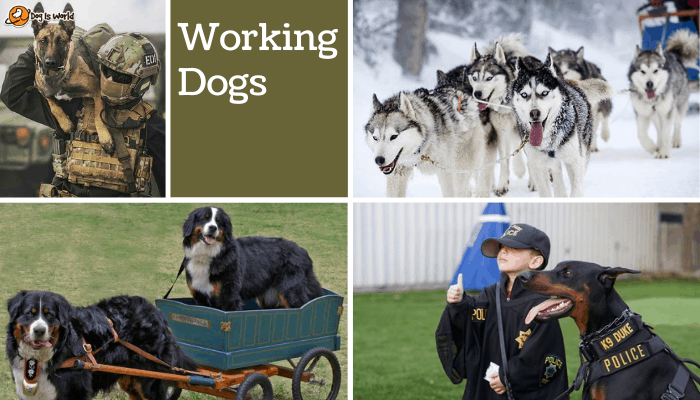 different dogs in working dog group