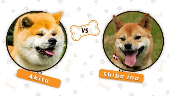 There are images of Akita and Shiba Inu inside the circle in the white background.
