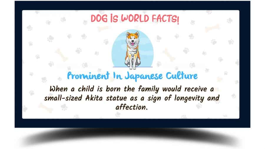fact about akita with a vector image of the akita dog on a white background