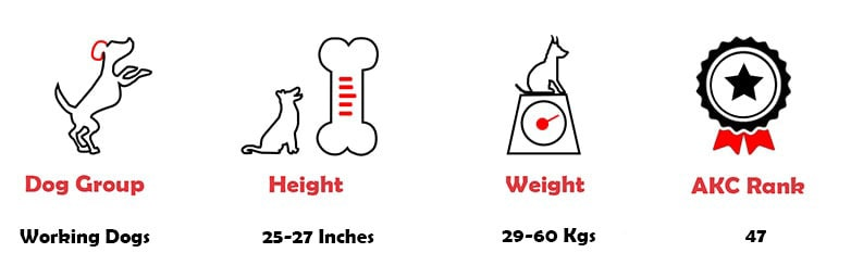 Akita dog fact that include dog group, height, weight and akc ranking.